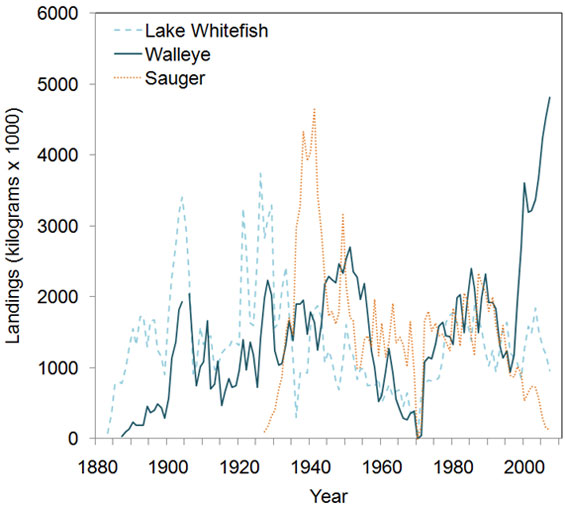 Environment canada water water publications chart annual landings of lake winnipeg commercial fishery by species sciox Gallery